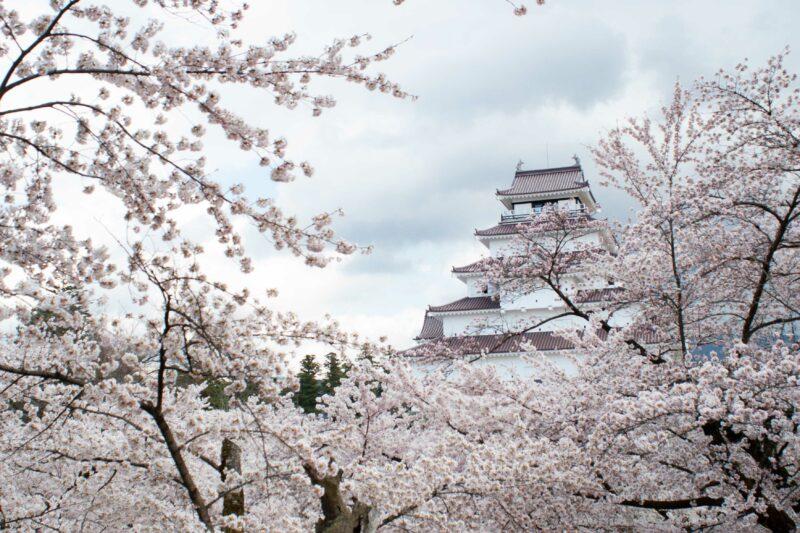 桜】会津若松市内は4月19日が満開日です! | くつろぎ宿ブログ~勝手に ...